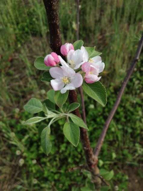 An Old-fashioned Orchard Blessing